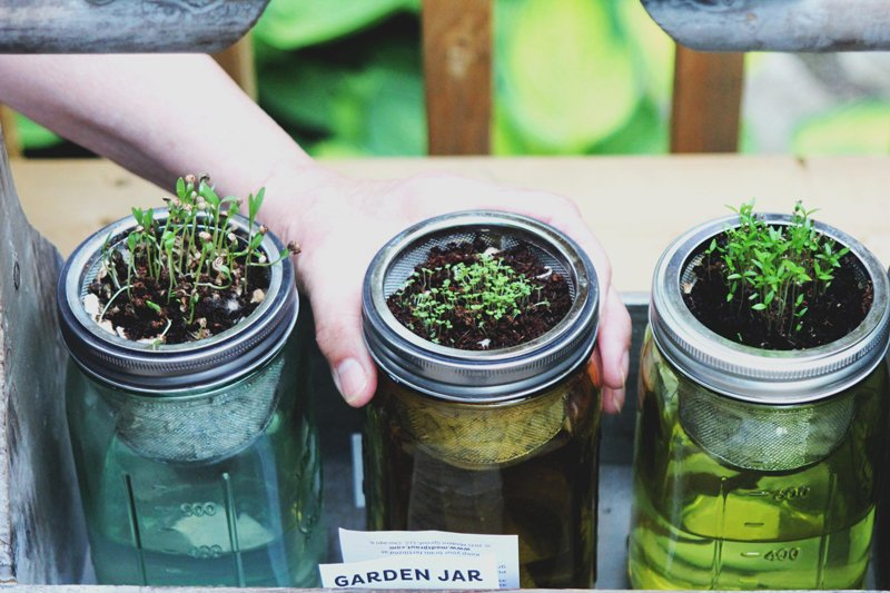 reuse jars for plants